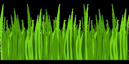grass-303857_1280