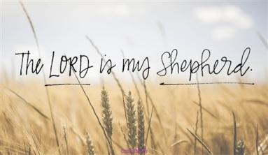 46814-lord-shepherd.500w.tn