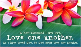 15172-love-one-another-plumeria-400x200