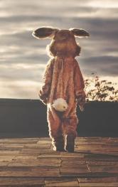 rabbit-542554_1280