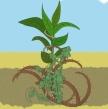 005-parable-sower-preschool