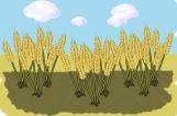 006-parable-sower-preschool