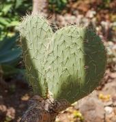 cactus-3697378__480.jpg
